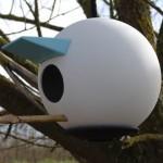 birdplace zoom